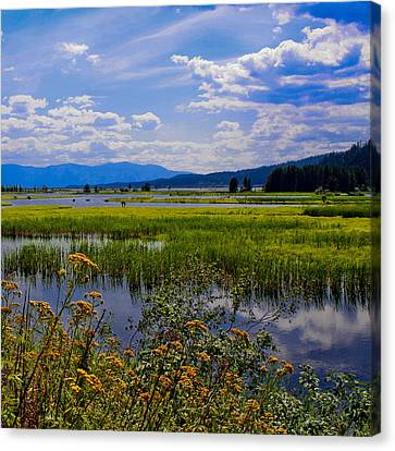 The Pack River - Hope Idaho Canvas Print by David Patterson