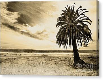 The Palm Swayed As The Storm On The Ocean Blew In Canvas Print by Artist and Photographer Laura Wrede