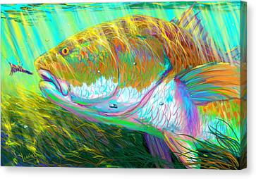 The Perfect Fly For The Perfect Moment  Canvas Print by Yusniel Santos
