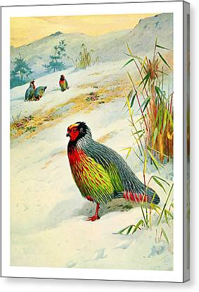 The Pheasant Canvas Print by Celestial Images