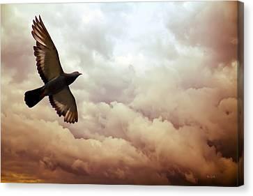 The Pigeon Canvas Print by Bob Orsillo