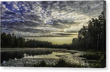 The Pines Canvas Print by Louis Dallara