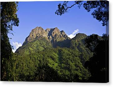 The Portal Peaks In The Rwenzori, Uganda Canvas Print by Martin Zwick