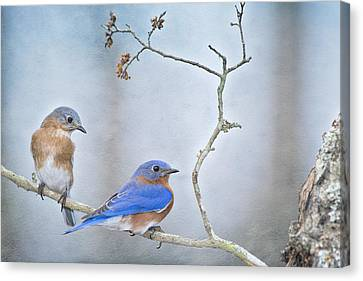 The Presence Of Bluebirds Canvas Print by Bonnie Barry