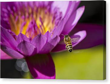 The Promise Of Pollen Canvas Print by Priya Ghose