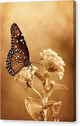 The Queen Butterfly  Canvas Print by Saija  Lehtonen