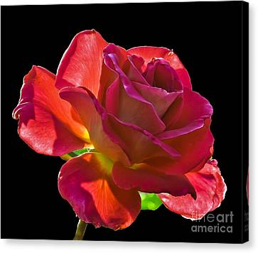 The Red One Canvas Print by Robert Bales