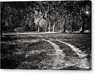 The Road Less Than Way Much Less Traveled  Canvas Print by Olivier Le Queinec