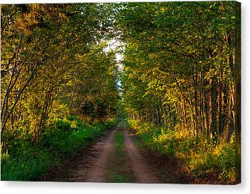 The Road Less Travelled Canvas Print by Matt Dobson