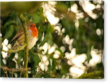 The Robin Canvas Print by Dave Woodbridge
