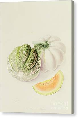 The Romana Melon Canvas Print by William Hooker