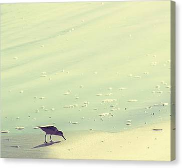 The Sandpiper Canvas Print by Amy Tyler
