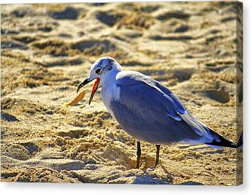 The Seagull And His Sand-crusted Fish 1 Of 3 Canvas Print by Jason Politte