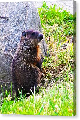 The Groundhog Sentinel Canvas Print by Ron  Tackett