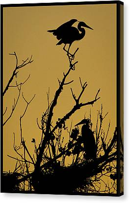 The Sentry Canvas Print by Kelly Gibson
