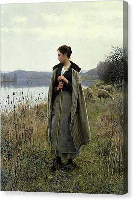 The Shepherdess Of Rolleboise Canvas Print by Daniel Ridgway Knight