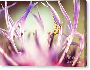 The Small Visitor Canvas Print by Hannes Cmarits