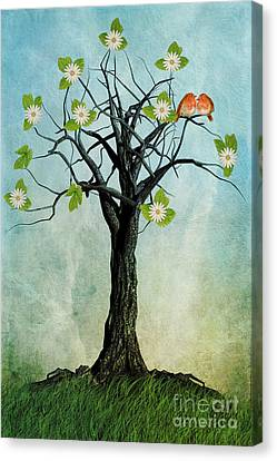 The Song Of Spring Canvas Print by John Edwards
