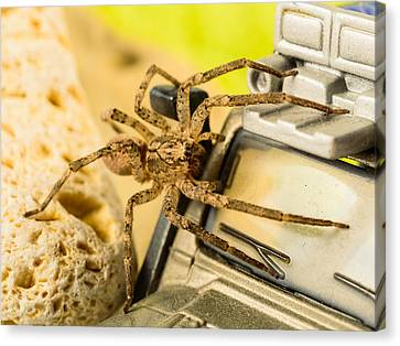 The Spider Series Vii Canvas Print by Marco Oliveira