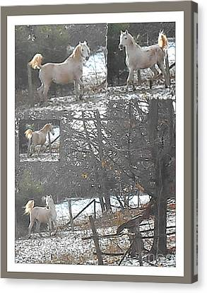 The Stallion Lives In The Country Canvas Print by Patricia Keller