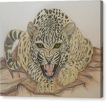 The Stare Canvas Print by Cheryl McKeeth