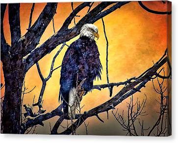 The Staring Eagle Canvas Print by Gary Smith