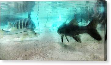 The Storyteller - A Fish Tale By Sharon Cummings Canvas Print by Sharon Cummings