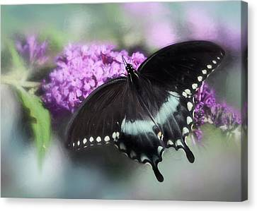 The Swallowtail Canvas Print by Lori Deiter