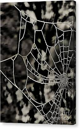 The Tangled Web Canvas Print by Sheila Laurens