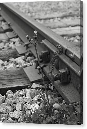 The Tenacity Of Nature Greyscale Canvas Print by MM Anderson