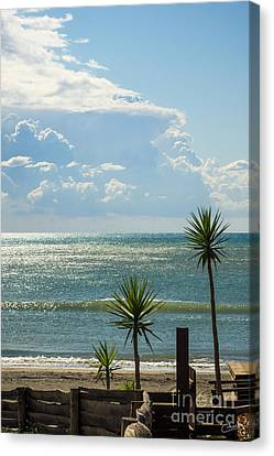 The Three Palms Canvas Print by Prints of Italy