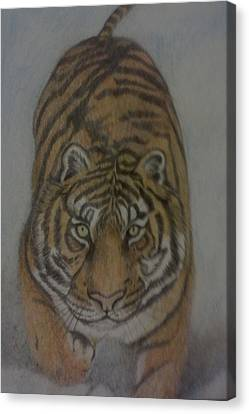 The Tiger Canvas Print by Christy Saunders Church