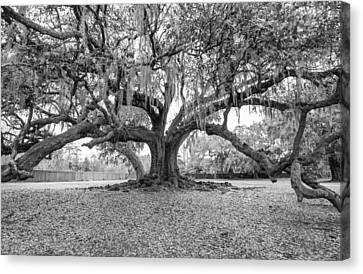 The Tree Of Life Monochrome Canvas Print by Steve Harrington