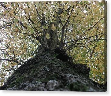 The Tree Canvas Print by Tony Stark