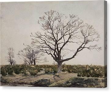 The Tree  Canvas Print by Henri Duhem