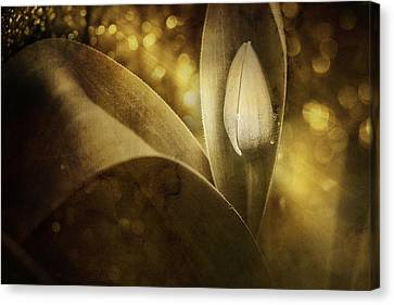 The Unveiling 2 Canvas Print by Scott Norris