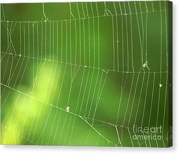 The Web Canvas Print by Roman Milert