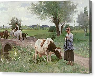 The Well Kept Cow Canvas Print by Edouard Debat-Ponsan