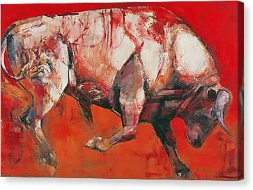 The White Bull Canvas Print by Mark Adlington