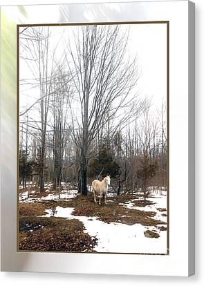 The White Stallion On A Snowless  Mound Canvas Print by Patricia Keller