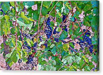 The Wine Maker I Canvas Print by Ken Evans