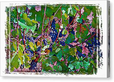 The Wine Maker II Canvas Print by Ken Evans