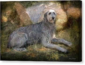 The Wolfhound  Canvas Print by Fran J Scott