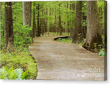 The Wooden Path Canvas Print by Patrick Shupert