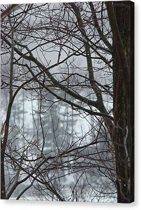 The Yugoslavian Forest 1 Canvas Print by The Black Rose