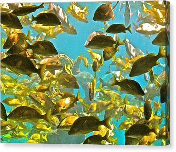 Theres Plenty Of Fish In The Sea Canvas Print by Amanda Just
