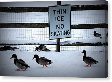 Thin Ice  Canvas Print by Judy Gallagher