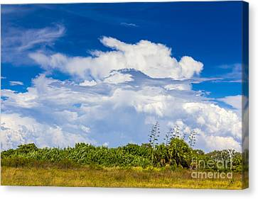 This Is What I See Canvas Print by Marvin Spates