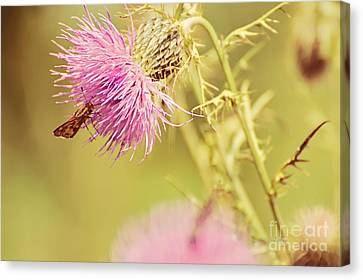 Thistle And Friend Canvas Print by Lois Bryan
