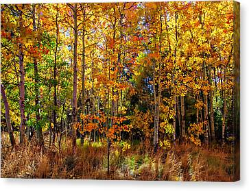 Thomas Creek Fall Color Canvas Print by Scott McGuire